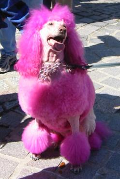 pink%20poodle