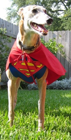 Super Dog Dingo